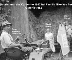 Sauer Nikolaus Althohlstr Kornernte 1957