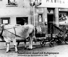 Appelmann Josef Althohlstr mit Kuhgespann 1956