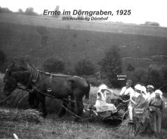 Elterhof Bahmer Ernte im Dörngraben 1925