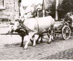 Nees Alois Marienstr mit Kühfuhrwerk