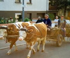 Vorbeck Ebersbacher Str mit Frau und Kühfuhrwerk 1992
